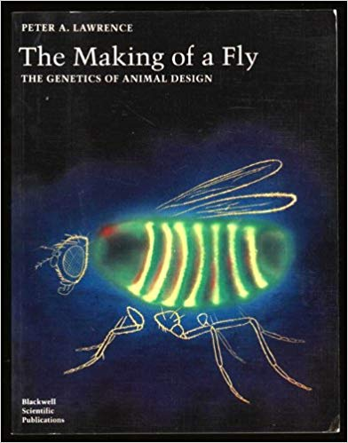 Making of a Fly